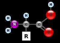 Структурная формула аминокислоты